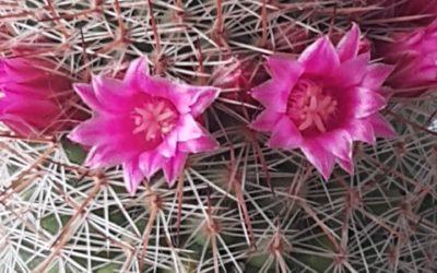 """""""La simpleza que brinda la naturaleza de una flor"""""""
